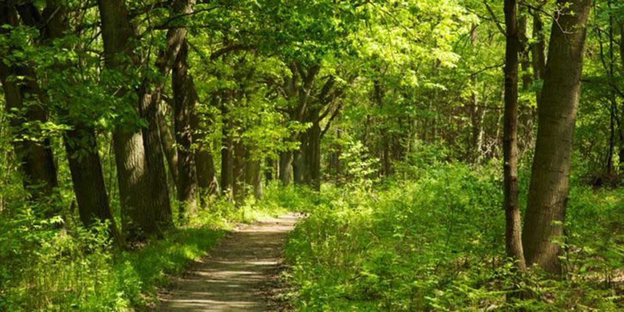 L'immagine mostra un sentiero alberato della Riserva Naturale Bosco di Alcamo