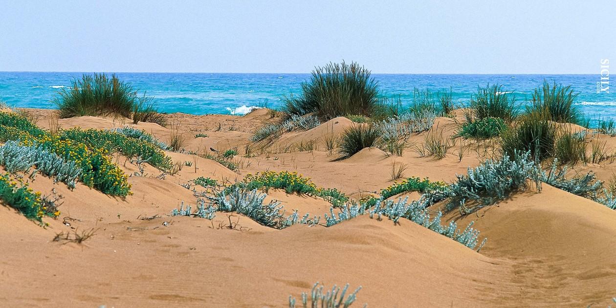 L'immagine mostra le dune della Riserva Naturale Foce del Belice